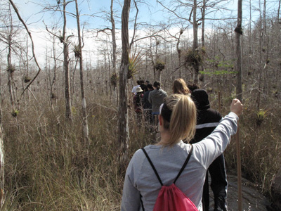 Sunday Afternoon Walk In Owen Park >> Our National Parks Swamp Walk Teaches About Big Cypress