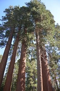 sequoiaslandingpage