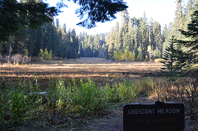 Crescent Meadow #1